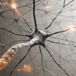 A neuron in your central nervous system.  A true LIFE LINE!